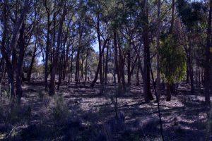 Oolong Sanctuary